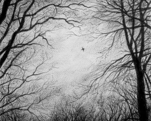Dessin-oiseau-Sebastien-Allemand