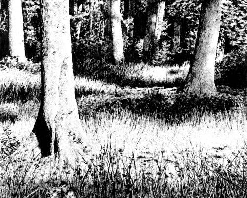Sebastien-Allemand-Foret-4